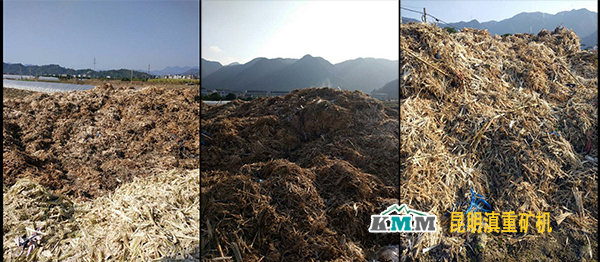黄岩地区无序堆放的糖蔗渣